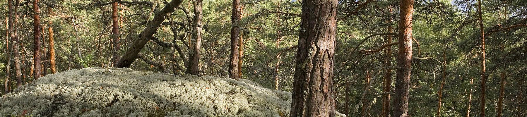 Oriveden Seudun Luonnonsuojeluyhdistys