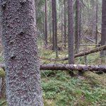 Valokuva: Auli Kilpeläinen